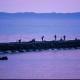 2001年優秀賞 【夢色の釣り人】 藤木 昇さん 撮影地:新潟市