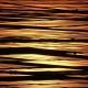 2006年優秀賞 【黄金色に染まる季(とき)】 植松 茂さん 撮影地:新潟県田上町